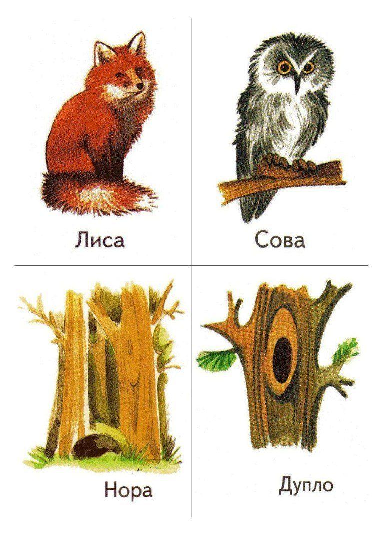 Картинки животных и где они живут